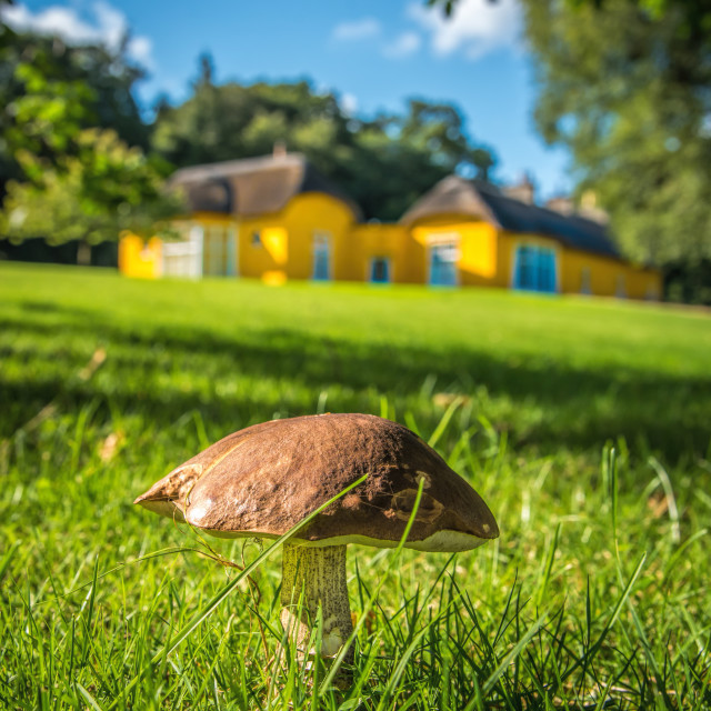 """mushroom fungi on the grounds of derrymore house Bessbrook"" stock image"