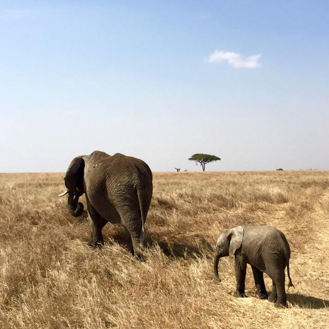 """""""Elephant Trails"""" stock image"""