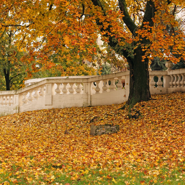 """""""tree and fallen fall leaves in park"""" stock image"""