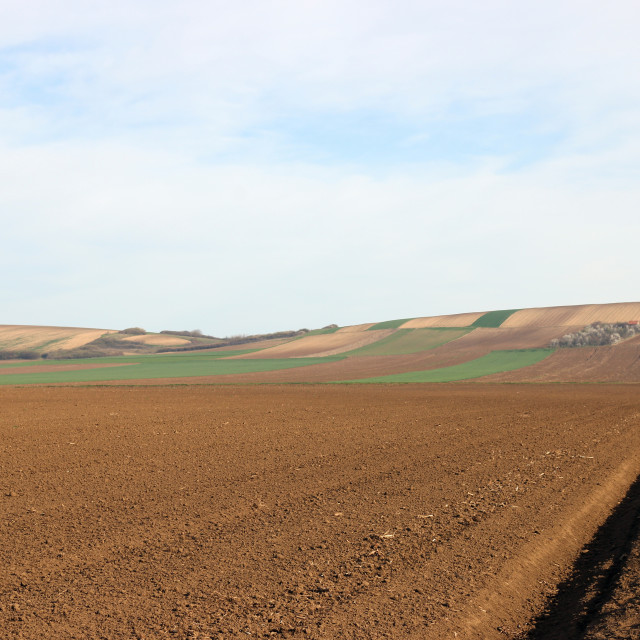 """""""Plowed field landscape agriculture Voivodina Serbia"""" stock image"""