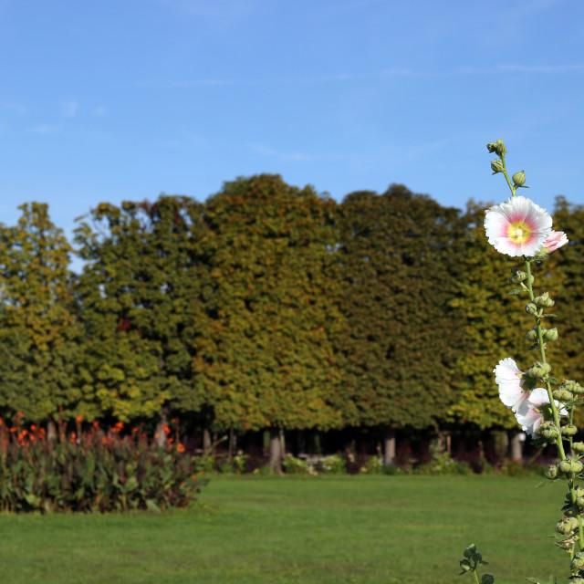 """""""white flower Augarten park in Vienna"""" stock image"""