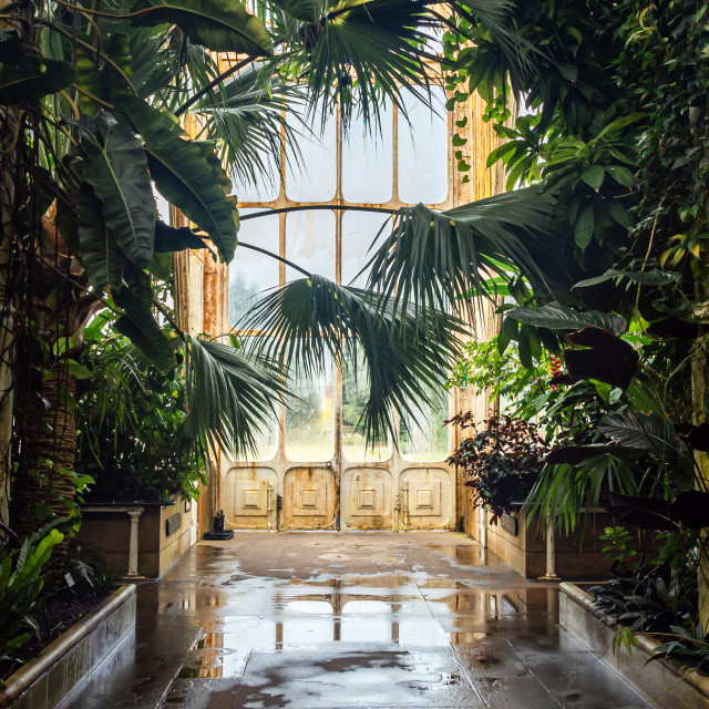 """""""The Palm House"""" stock image"""