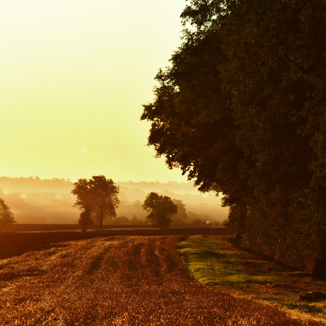 """A golden morning in the countryside"" stock image"