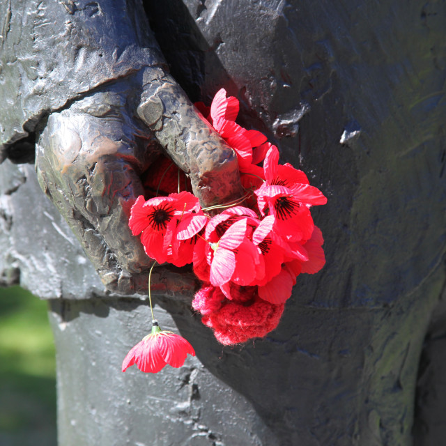 """""""Poppies for remembrance , Melbourne,"""" stock image"""