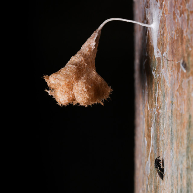 """The hatchling wasp nest"" stock image"