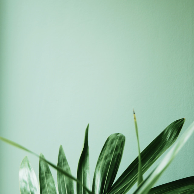 """Green leaves on green background"" stock image"