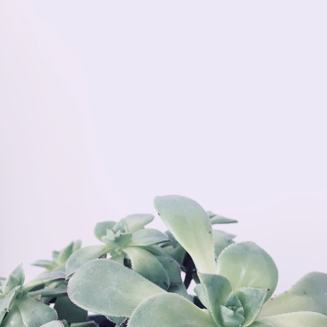 """Succulents against pastel background"" stock image"