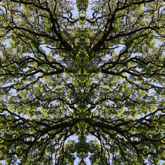 """Mirror image trees"" stock image"