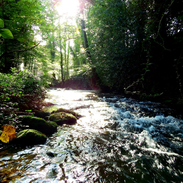 """""""Beautiful Stream in a forest"""" stock image"""