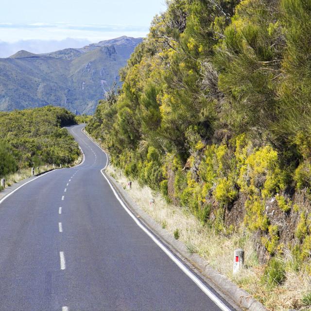 """Road in Paul da Serra in Madeira"" stock image"