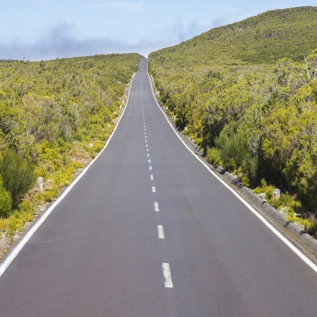"""""""Road on Paul da Serra plateau in Madeira"""" stock image"""