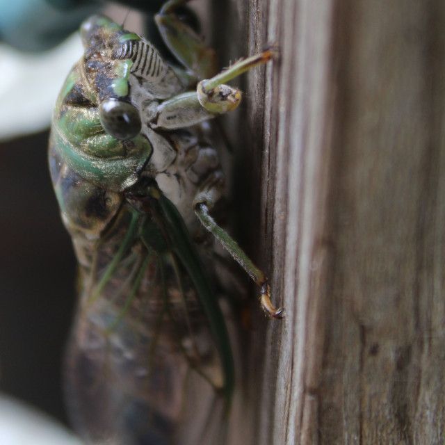 """cicaada on the post"" stock image"