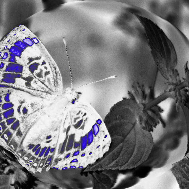 """""""abstract crescent butterfly"""" stock image"""