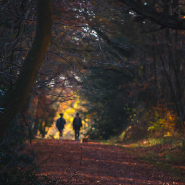 """""""Abstract Image of two people walking through a tree-lined tunnel"""" stock image"""