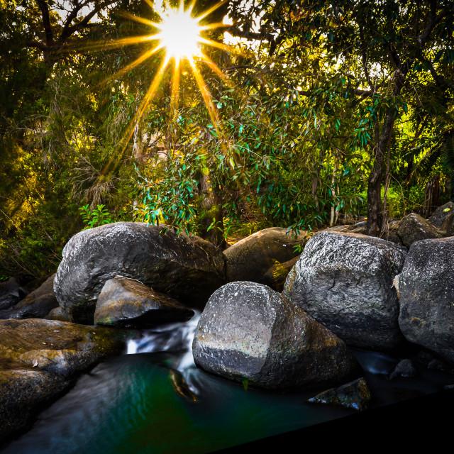 """""""Rainforest Awakens"""" stock image"""