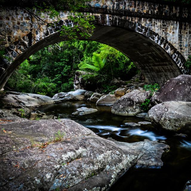 """Rainforest Bridge"" stock image"