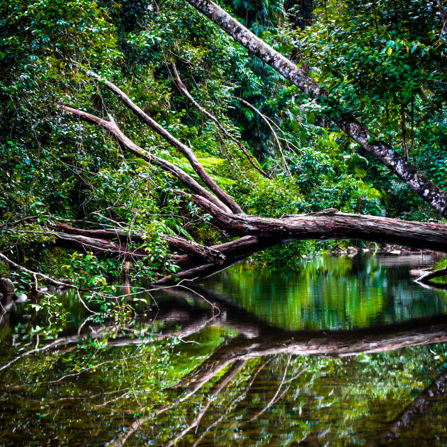 """Rainforest Dreaming"" stock image"