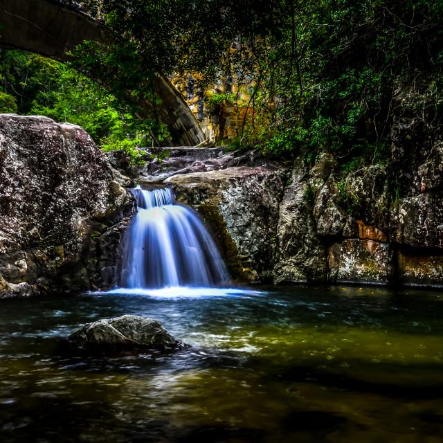 """Rainforest Serenity"" stock image"