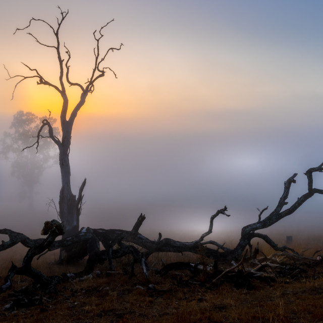 """""""Mystique of Mornings"""" stock image"""