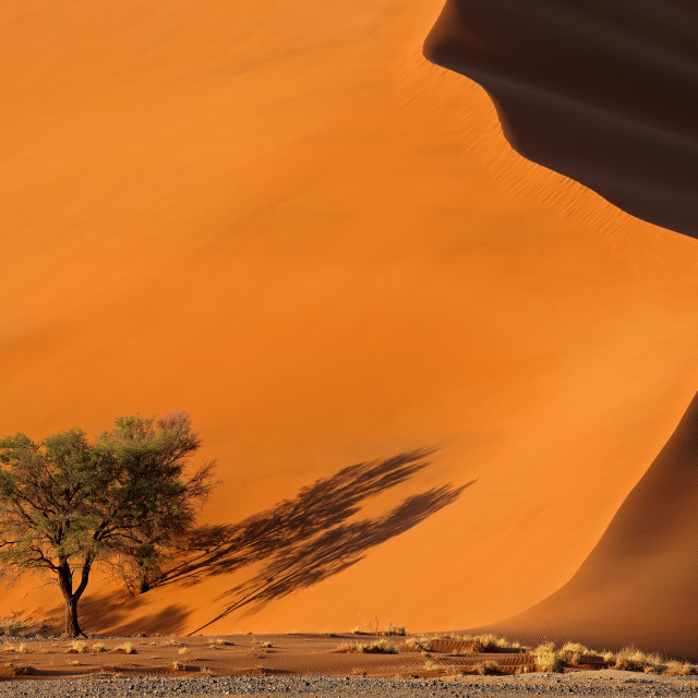 """Sand dune and trees - Namib desert"" stock image"