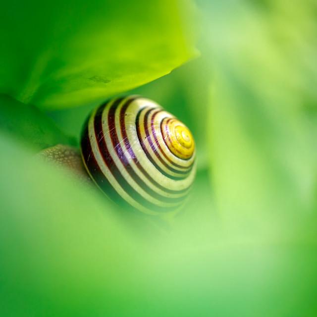 """Snail"" stock image"