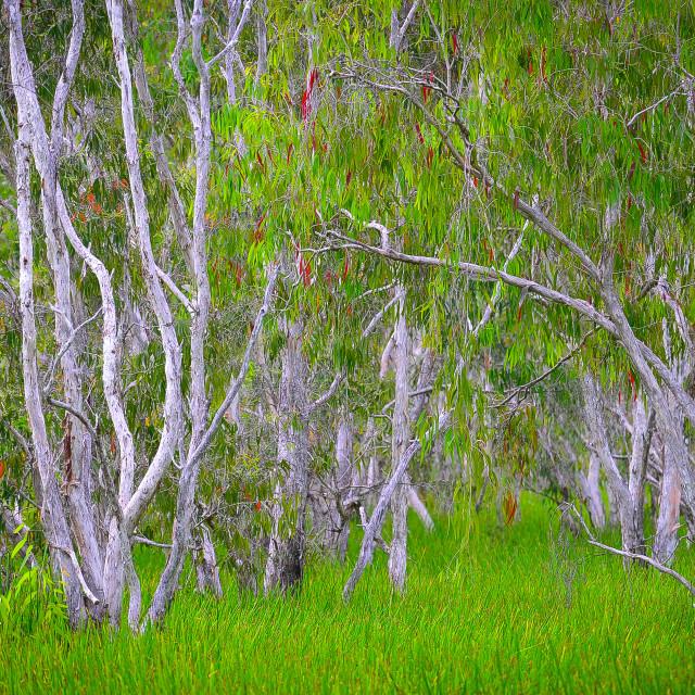 """Lush Tropical Wetlands"" stock image"