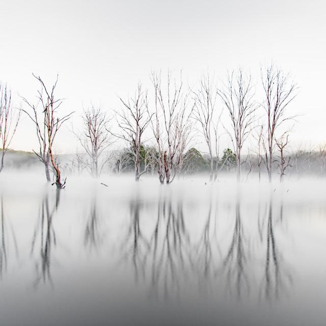 """""""Misty Morning Magic"""" stock image"""