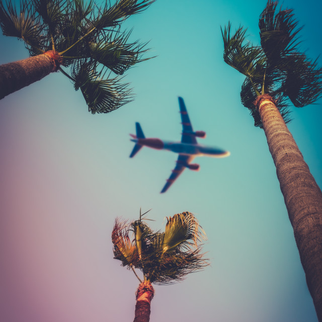 """""""Palm Trees With Airplane Overhead"""" stock image"""