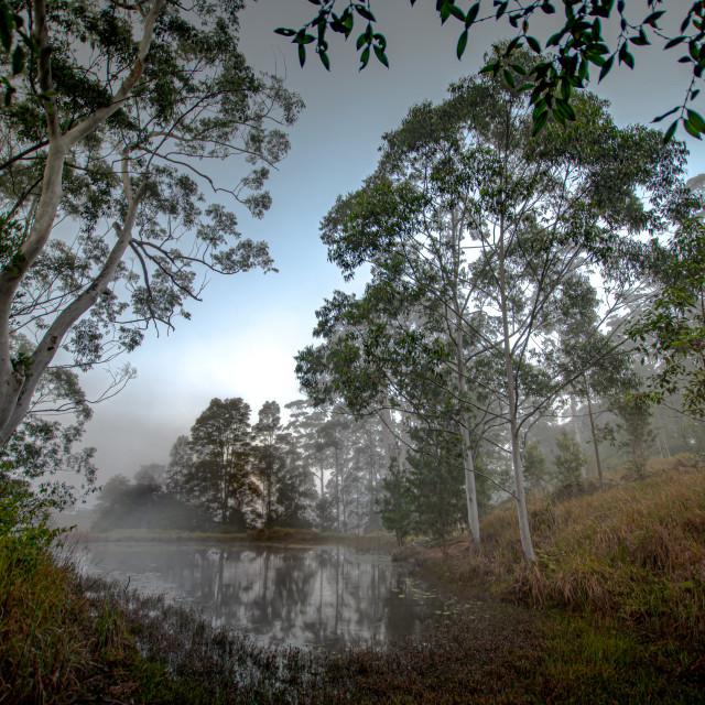 """""""Misty Pond"""" stock image"""