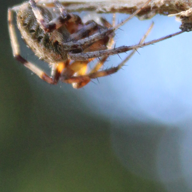 """""""close up spider"""" stock image"""