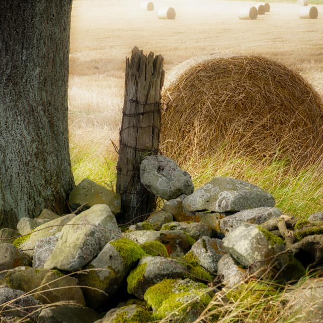 """""""End of summer in Scotland"""" stock image"""