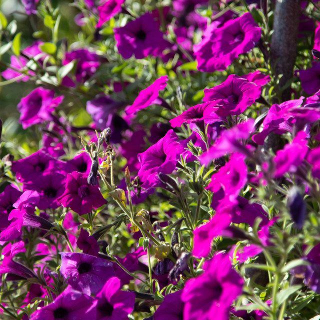 """Meadow Flowers"" stock image"