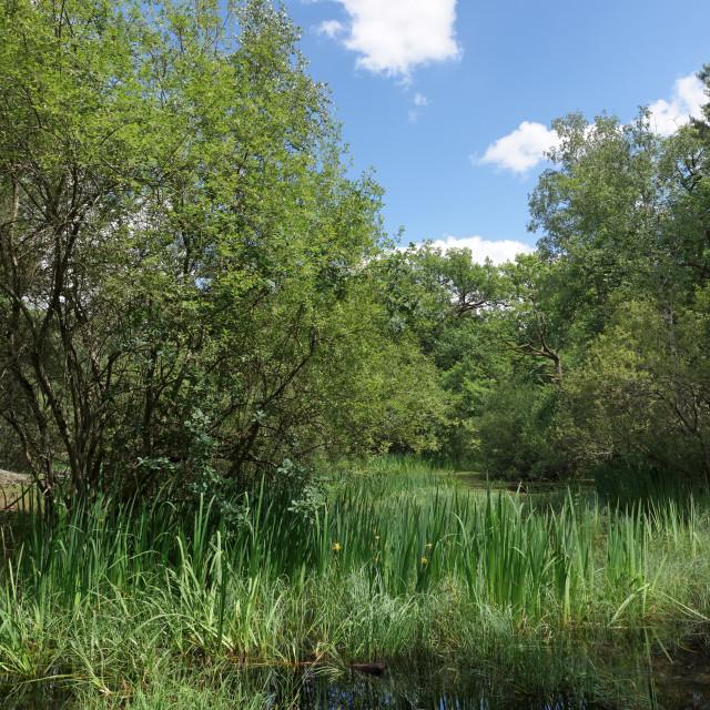 """fairies pond reflection"" stock image"