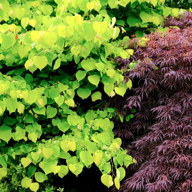 """""""Foliage"""" stock image"""