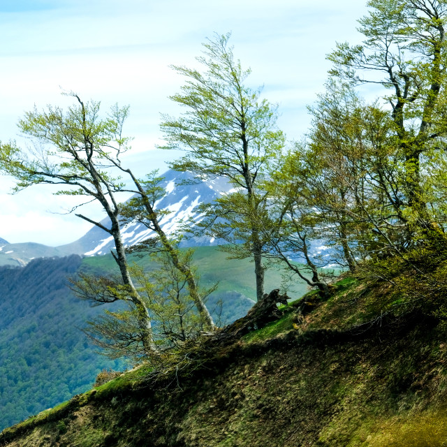 """Pyrenees"" stock image"