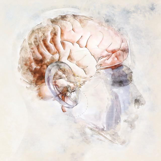 """Digital artistic Sketch of a human Brain"" stock image"