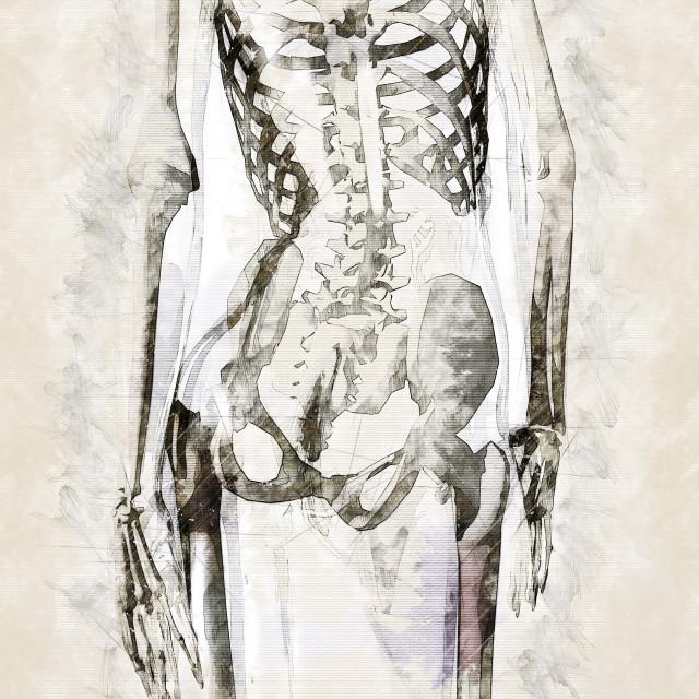 """Digital artistic Sketch of the human Anatomy"" stock image"
