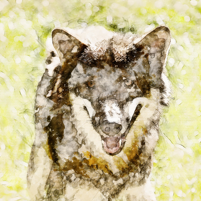 """""""Digital artistic Sketch of a Wolf"""" stock image"""