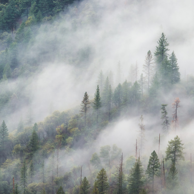 """Fog Moving Across A Forest on a Mountain."" stock image"