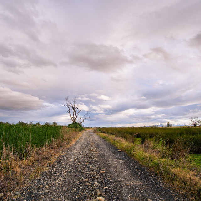 """Dirt Road Through Empty Fields"" stock image"