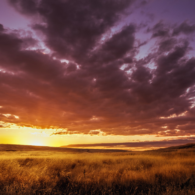 """Amazing Colorful Sunset Over an EMpty Field"" stock image"
