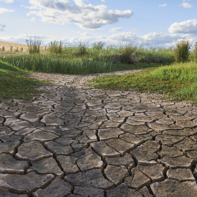 """Cracked earth of a dry creek passing though a green field."" stock image"