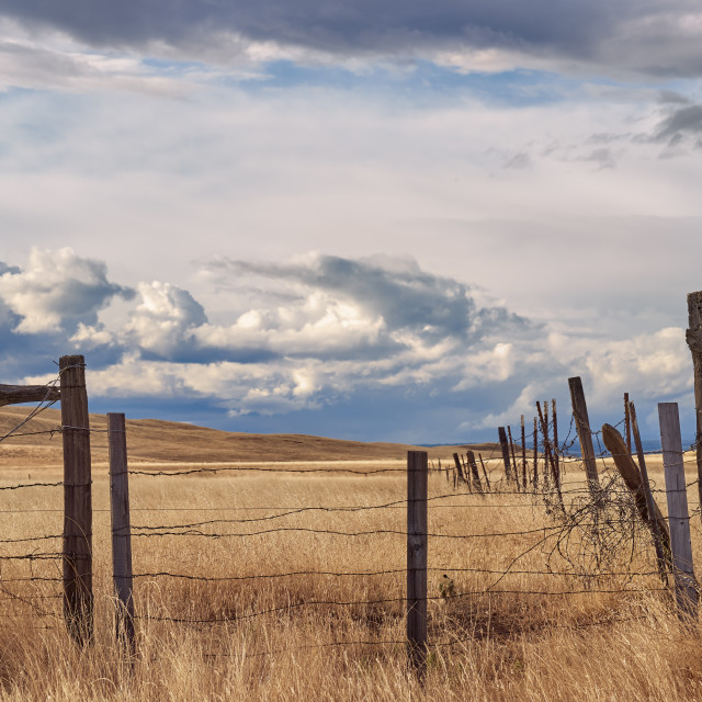 """Rural Barbed Wire Fence on a Northern California Ranch"" stock image"