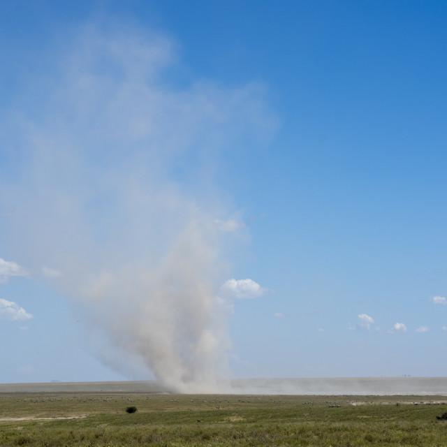 """Dust devil, Ndutu, Ngorongoro Conservation Area, Serengeti, Tanzania."" stock image"