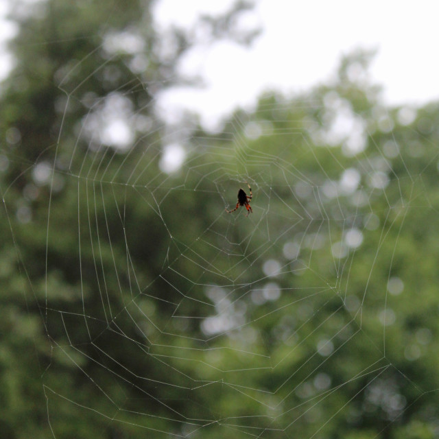 """""""hanging by a web"""" stock image"""