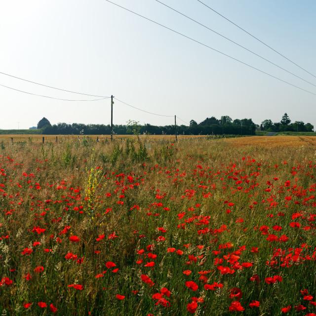 """Beaugency fields"" stock image"