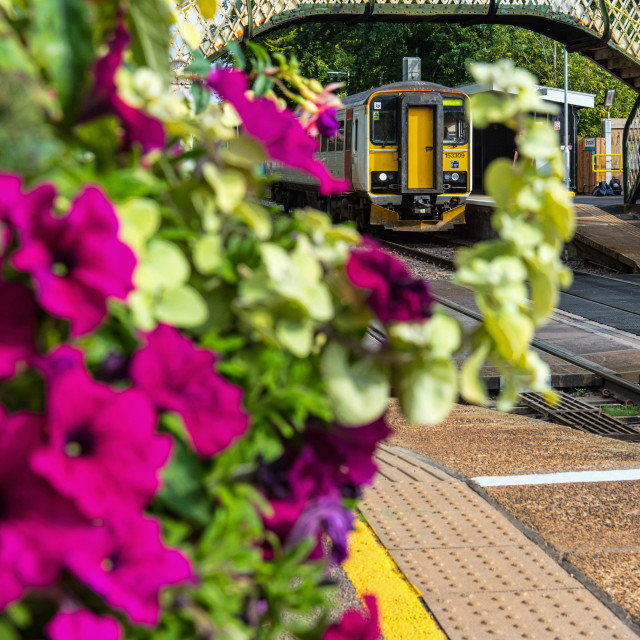 """Brundall Bloom"" stock image"