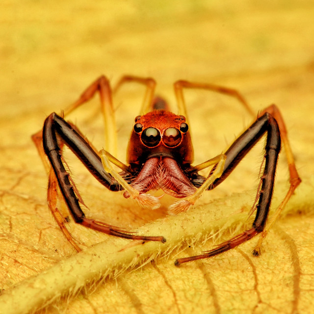 """Portrait of Spider"" stock image"