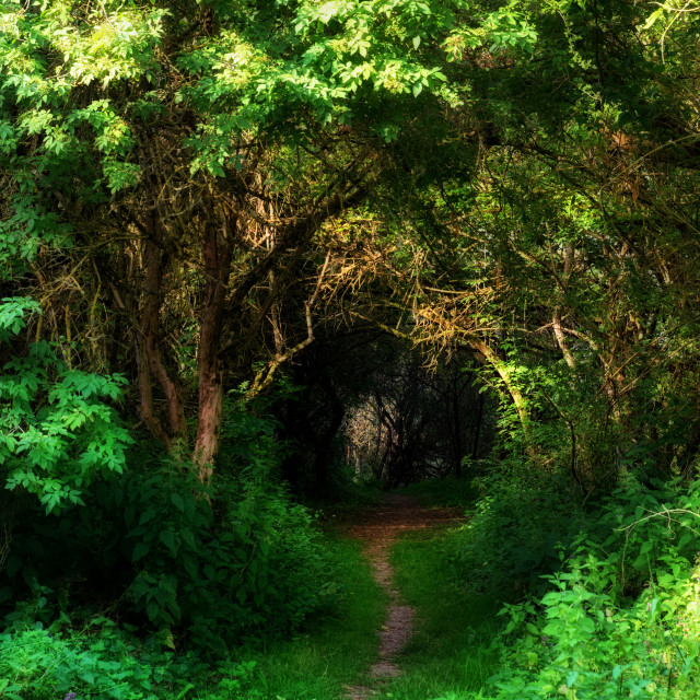 """""""Beaugency path"""" stock image"""