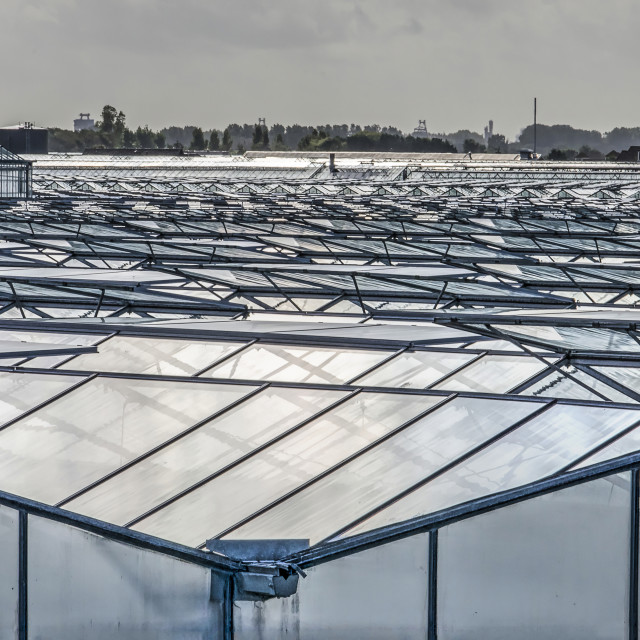 """""""Greenhouses in Dutch Westland"""" stock image"""